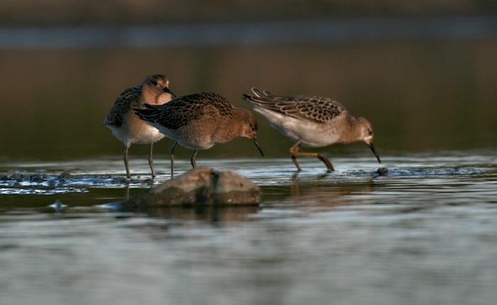 O migrácii vtáctva